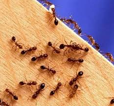 Image result for get rid of ants