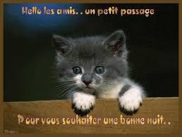 """Résultat de recherche d'images pour """"bonne soirée chat"""""""