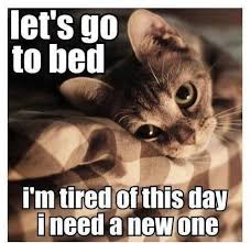 Funny Lazy Cat   Funny Pictures, Quotes, Memes, Jokes via Relatably.com