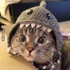 Výsledek obrázku pro vtipy warriors cats