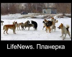 НАТО беспокоит российская пропаганда, - Столтенберг - Цензор.НЕТ 7247