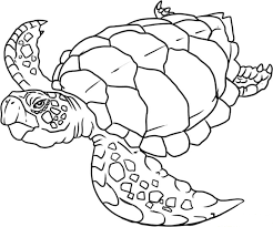 Small Picture Cute turtle coloring pages for kids ColoringStar