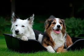 About the Wonderfold <b>dog bed</b> & why your dog will love it ...