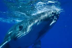 Bildergebnis für Wal