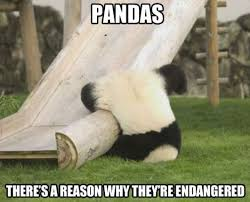 -Funny-Silly-Panda-MEME-and-LOL.jpg via Relatably.com