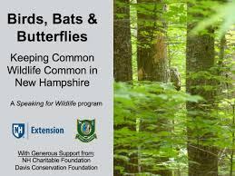 birds bats and butterflies cooperative extension birds bats butterflies