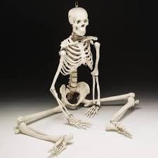 Resultado de imagen de esqueleto real