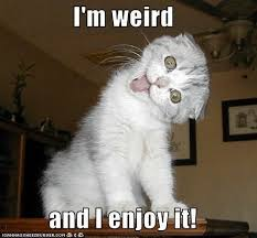 I'm Weird And I Enjoy It / Grumpy Cat Meme / Grumpy Cat Pictures ... via Relatably.com