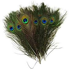 Pack of 50pc <b>High Quality</b> Real Natural <b>Peacock Feathers</b> 10-12
