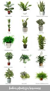 collage of awesome indoor plants bomboracustomfurniture blogsilove charming office plants
