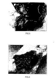 patent us20140010887 modified starch material of biocompatible patent drawing