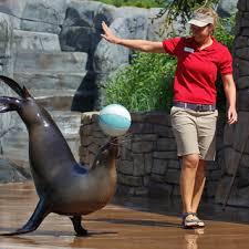 The Goddard School Sea <b>Lion Show</b>   Saint Louis Zoo