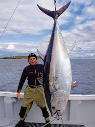 Image result for caught the fish on the wharf