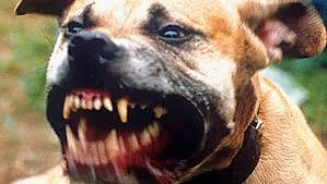 Ahok: Saya Anjingnya Jakarta untuk Jaga Aset Warga agar Tidak Dicuri