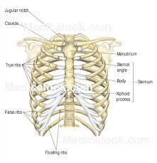 anatomy essay questions human anatomy topics tag human anatomy essay topics human anatomy