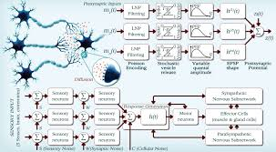 minerva communication theoretical foundations of nervous system i e identification of the existing molecular communication mechanisms development of architectures and networking techniques for nanomachines