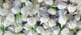 Image result for images of jasmine flowers