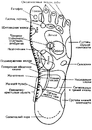 modern institute of reflexologythis chart was contributed by reflexologist jay kaufman whose ancestory is russian  compare this chart and learn some russian words