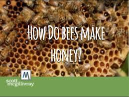 How Do <b>Bees</b> Make Honey? - YouTube
