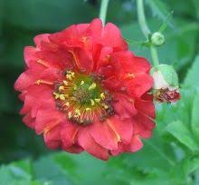 Small Picture 81 best Graceful Gardens Perennial Flowers images on Pinterest