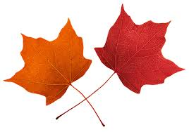 Image result for fall emojis