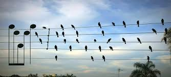 「Birds on The Wires」的圖片搜尋結果