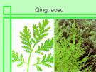 qinghaosu
