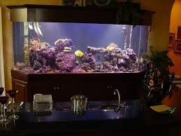 tampa fl custom aquarium pictures drysdale aquarium aquarium office