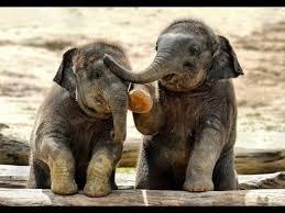 SOO CUTE <b>Baby Elephant</b> Videos Compilation - Cutest Baby <b>animals</b>
