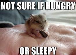 not sure if hungry or sleepy - Memes Comix Funny Pix via Relatably.com