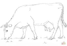 Small Picture Grazing Cow coloring page Free Printable Coloring Pages