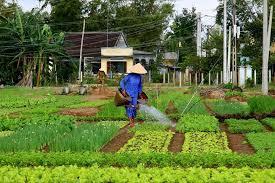 can organic farming feed the world    small footprint family