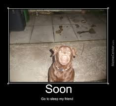 Soon Smile Dog by mrcactus - Meme Center via Relatably.com