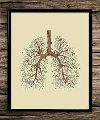 nature lung anatomy science prints anatomy print office decor home decor home office room calmly