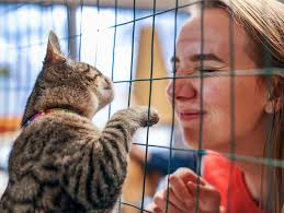 More than a <b>Pet</b> Charity: Connecting People & <b>Pets</b> | <b>PetSmart</b> ...