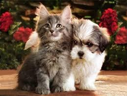 منذ متى و القطط تتصالح مع الكلاب؟ Images?q=tbn:ANd9GcRCCI7PVVacZTquIDF0mR19PdvKu_4B6suN6UUk53Cww4Bf8KU_
