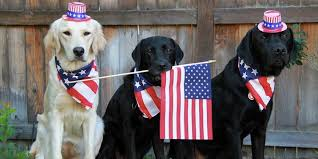 Image result for animals in 4th of july clothes