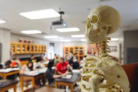 bs biology biomedical sciences shawnee state university skeleton in pre med anatomy lab