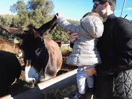 it s ideal for the mountain wellness center editor fuives catalan donkey