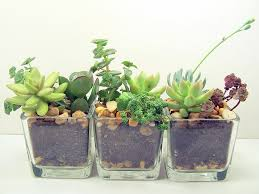 1000 ideas about office plants on pinterest interior plants offices and green office best office plant no sunlight