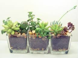 1000 ideas about office plants on pinterest interior plants offices and green office best office plants no sunlight