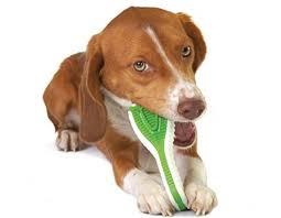 Petstages Игрушка для собак Finity <b>Dental</b> Chew <b>зубная щетка</b> ...