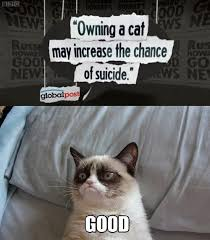 Sullen cat seems pleased, for a change. - Chicken Crap via Relatably.com