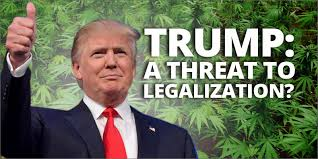 Image result for donald trump and weed