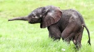 Aww-some <b>animals</b>: Why do <b>baby</b> mammals melt our hearts? - BBC ...