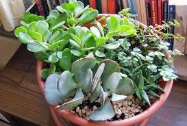 plants best office plants no sunlight