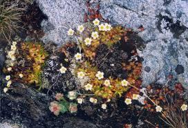 <b>Flowers on the</b> rock