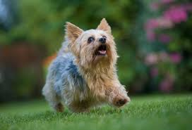 The <b>Cutest Dog</b> Breeds to Keep as Pets