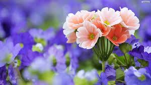 வால்பேப்பர்கள் ( flowers wallpapers ) 01 - Page 5 Images?q=tbn:ANd9GcRDWUI3IXIAeMWe8yPkfCf5L_5kaZDT3wEHU96Ipta6ZLdUIS_Dkw