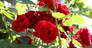 نتیجه تصویری برای منظره زیبای گل و گیاه